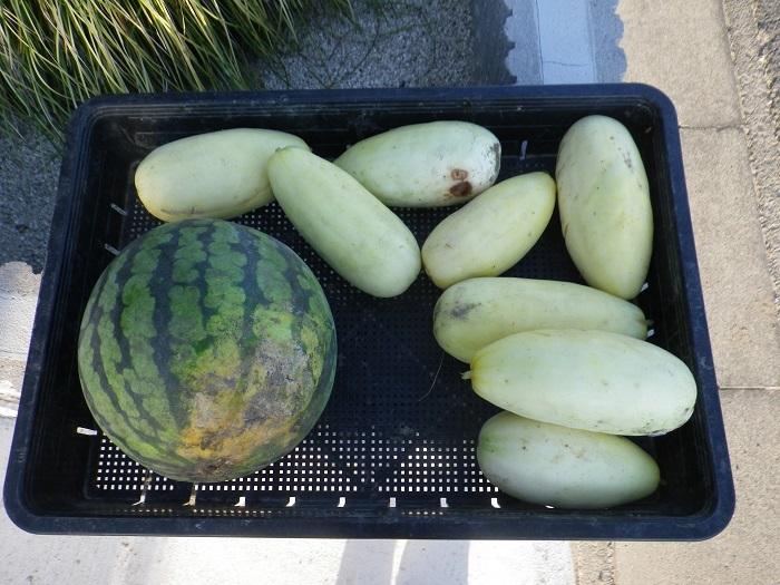 収穫4_17_09_03