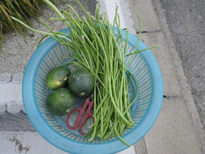 収穫17_09_04