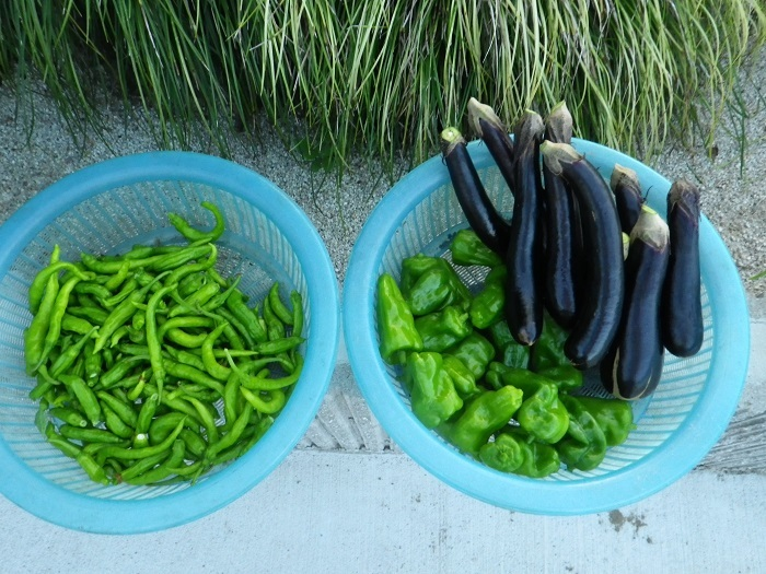 収穫2_17_09_059