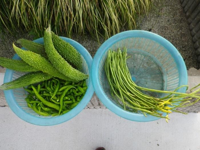 収穫17_09_13