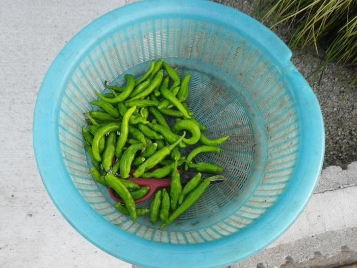 収穫1_17_09_21