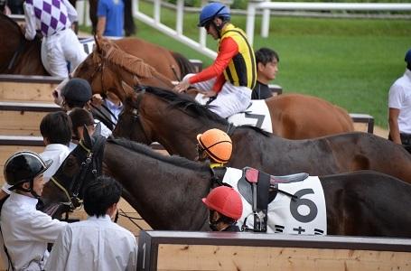 8・札幌・隣の馬
