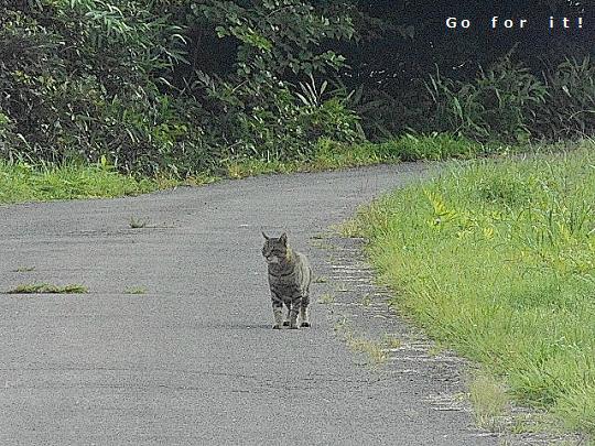 猫 170912