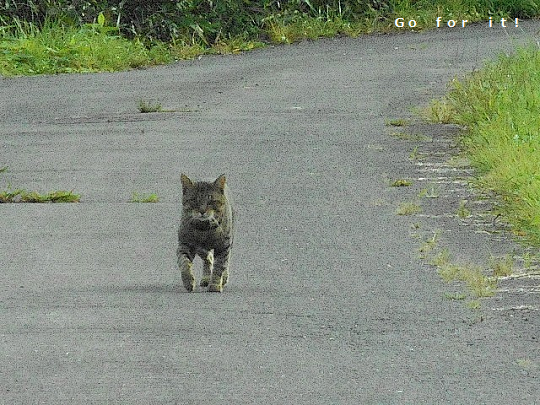 猫2 170912