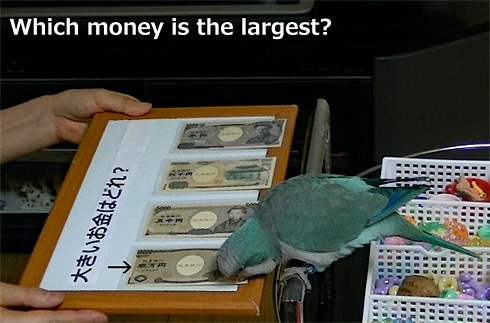 money1_4