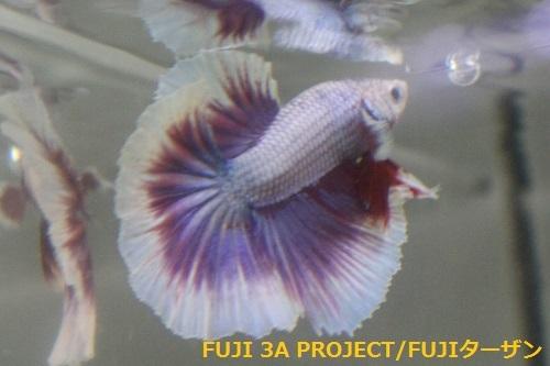 ハーフムーンA (2)