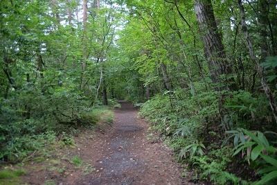 木に囲まれた道