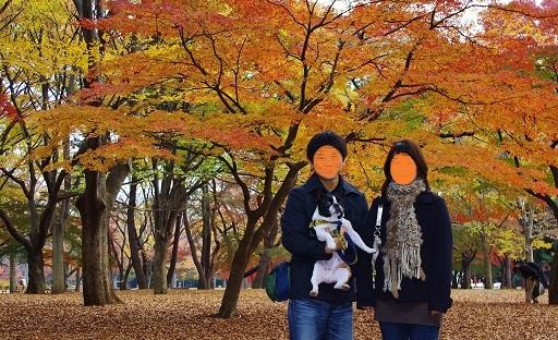 7-30代々木紅葉
