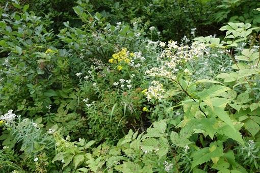 登山道沿いは花や緑がいっぱい