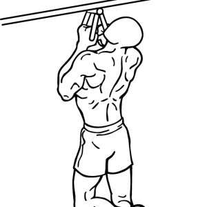 narrow-parallel-grip-chin-ups-1-crop_20170803064841c9b.png