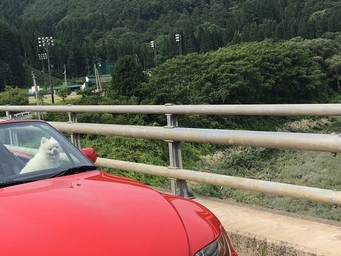13あやめ橋4
