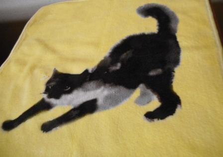 猫ハンカチ1