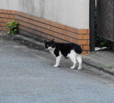 kurosiro1.jpg