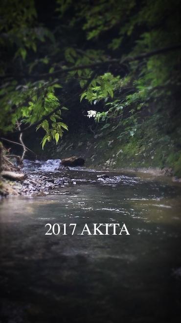 akita2017.jpg
