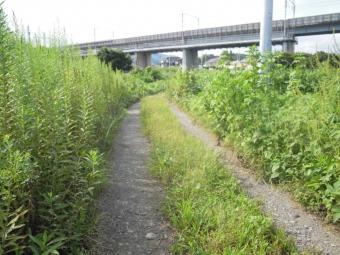 酒匂神社から中村川沿い170913