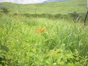 湿原の花=4
