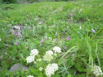 美ヶ原の花ー1-2170804
