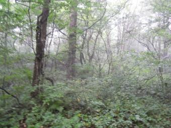霧の林の中を進む170907