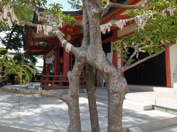 合わさった樹