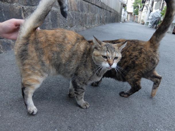 猫17,19