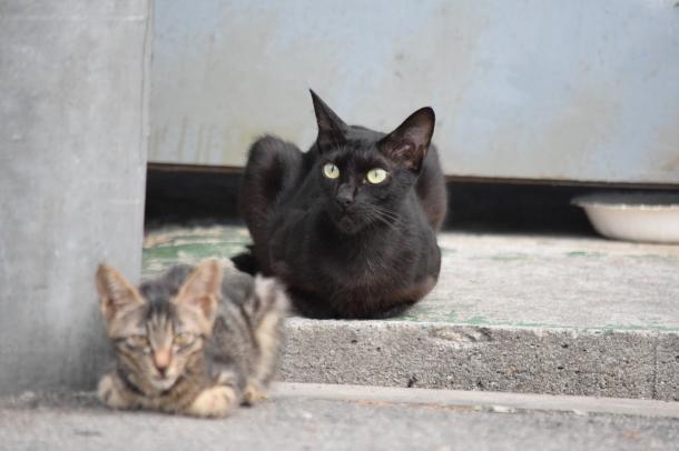 猫22,23