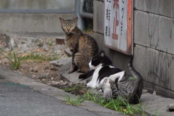 猫33,34,35