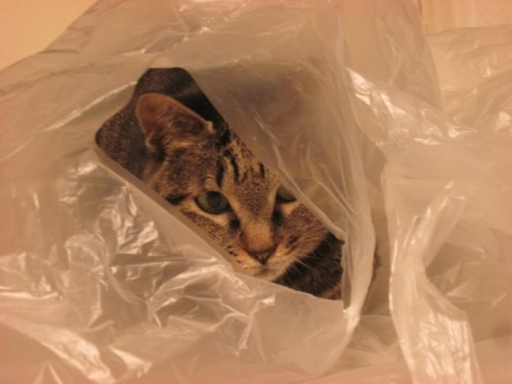 袋の中のジンジャー