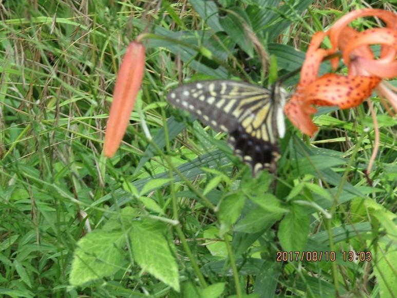 松林の蝶2