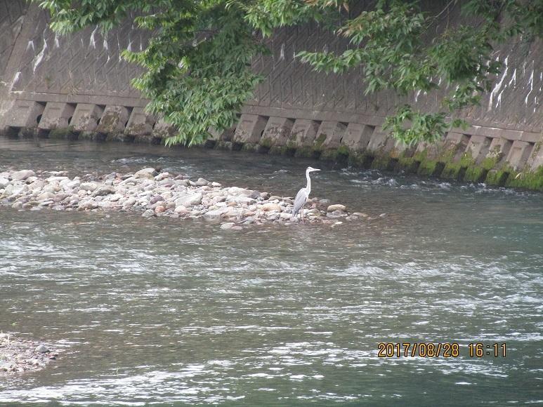 真瀬川河口1