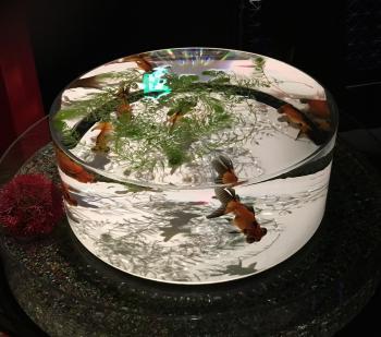 art aquqrium in Nihonbashi2
