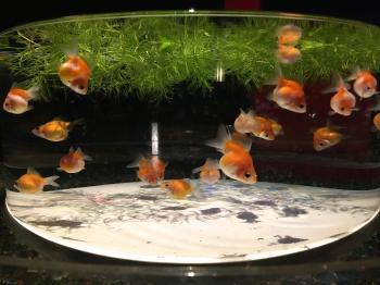art aquqrium in Nihonbashi4