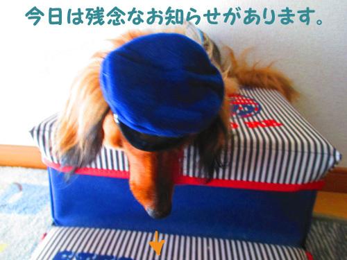 pachi1.jpg