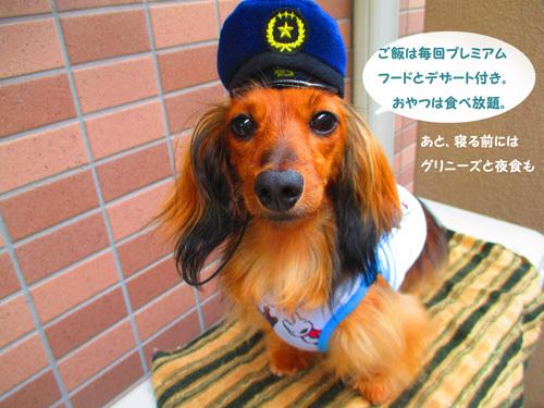 pachi8.jpg