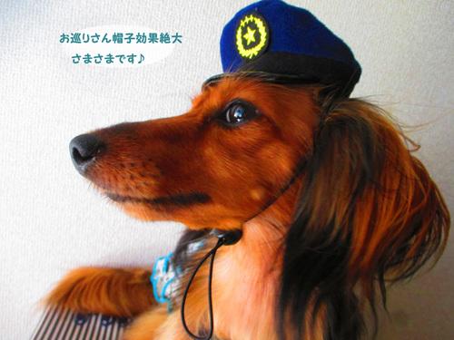 pachi9.jpg