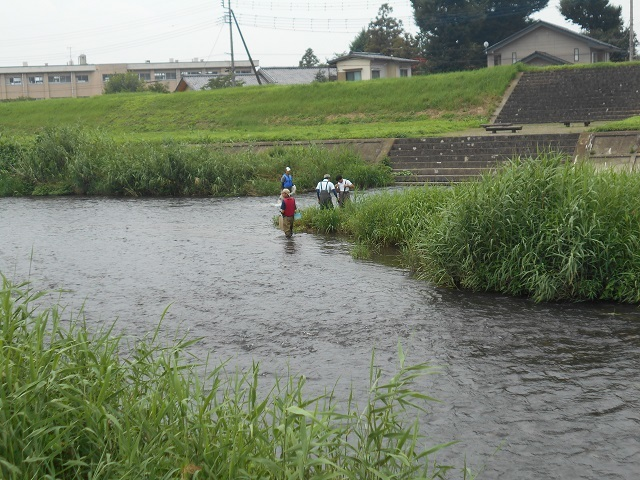 DSCN27820724桃の木川自然環境調査立ち合い大嶋鈴木.jpg