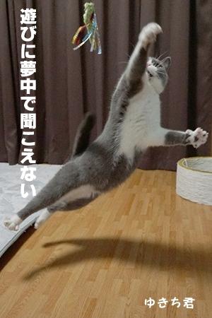 yukichi4.jpg