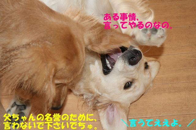 IMG_1529_20170713232518fa1.jpg