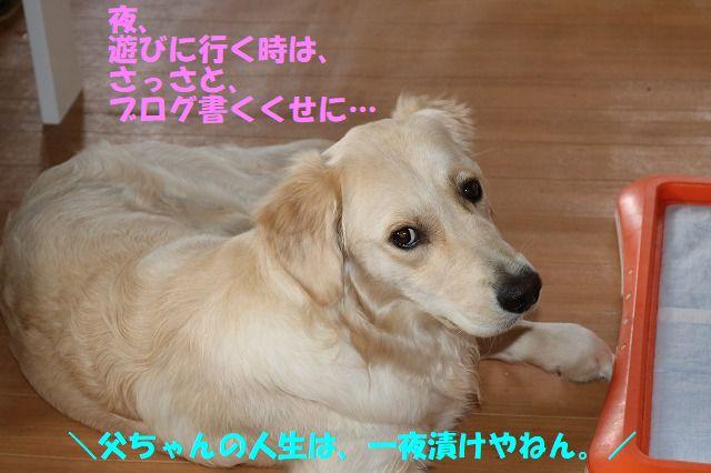 IMG_1674_2017071900041685c.jpg