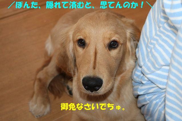 IMG_1678_20170715203348aa1.jpg
