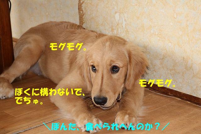 IMG_1684_20170717172631b9c.jpg
