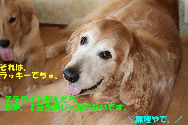 IMG_1773_201707202335180e1.jpg