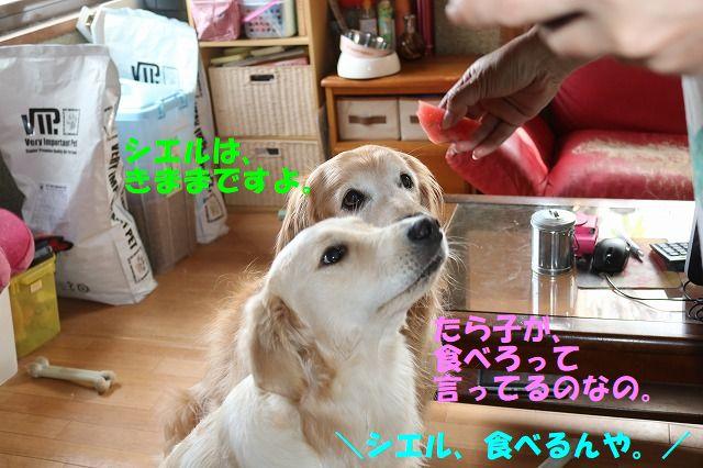 IMG_2416_201707301536527e4.jpg