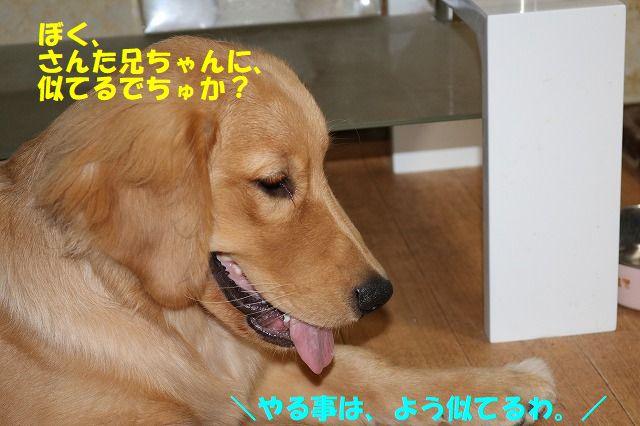 IMG_2508_2017080620243515e.jpg