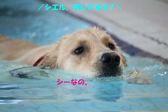 IMG_3162_20170822210830fac.jpg