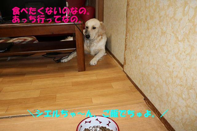 IMG_3736.jpg