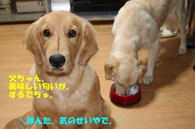IMG_3746.jpg