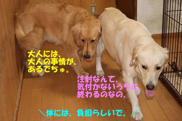 IMG_3849_20170831003312c29.jpg