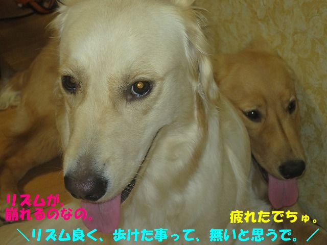 IMG_8945.jpg
