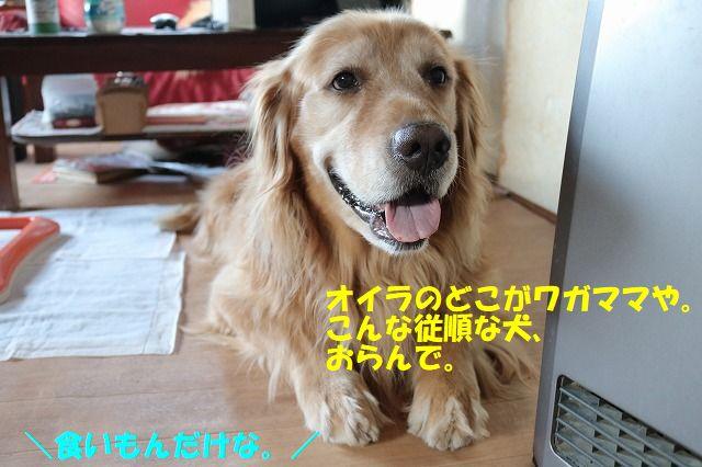 IMG_9003_20170721234718541.jpg
