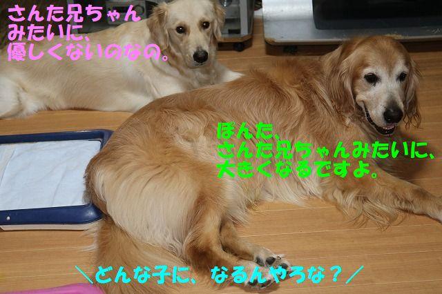 IMG_9142_20170909234528a9a.jpg